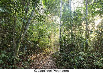 Camino de la selva en la luz de la mañana