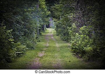 Camino de tierra a través del bosque
