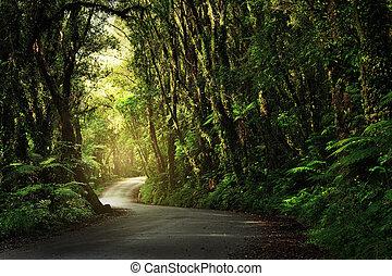 Camino de tierra pasando por una jungla espesa y exuberante