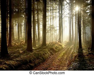 Camino en el bosque de otoño al atardecer
