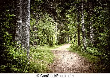 Camino en el oscuro y sombrío bosque