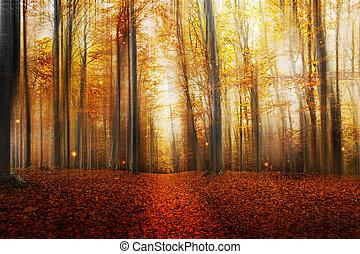 Camino mágico en el bosque de otoño