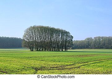Campo y bosque 01