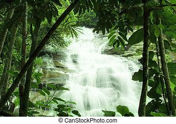 Cascadas en el bosque verde