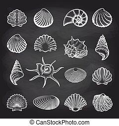 Conchas marinas en la pizarra