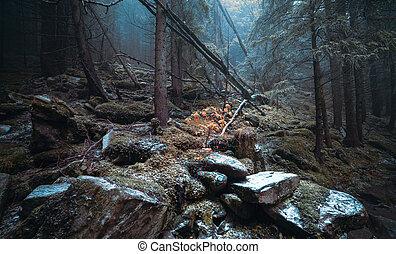 Día de otoño en el bosque