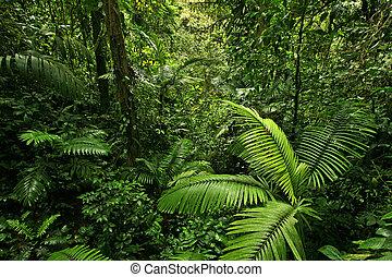Densa selva tropical