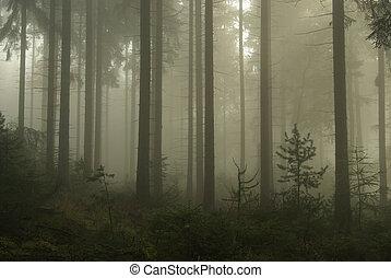 Descansa en la niebla