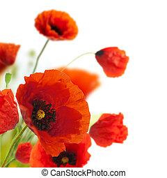 Diseño floral, flores de decoración, amapolas, esquina