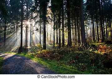 El bosque por la mañana