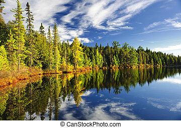 El bosque se refleja en el lago