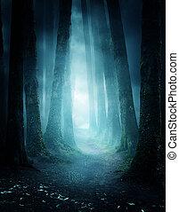 El misterioso sendero del bosque