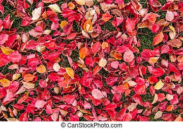 El otoño deja a la 01