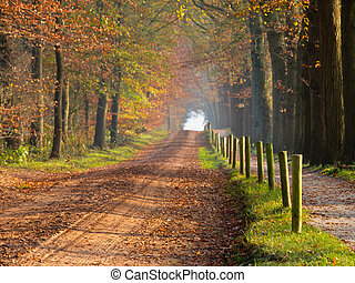 El sendero del bosque
