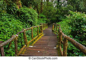 El sendero natural de madera en Doi Inthanon
