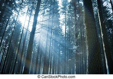 El sol brilla a través del bosque