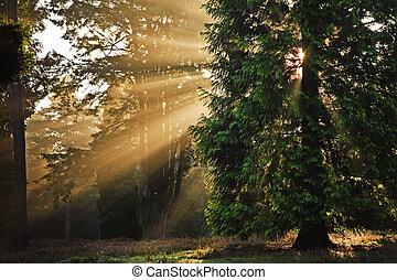 El sol motivador brilla a través de los árboles en el bosque de otoño al amanecer