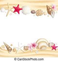 Encuadre de conchas