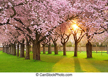 Fascinante escenario primaveral