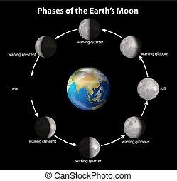 fases, earth's, luna