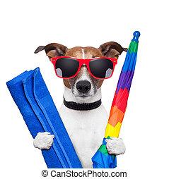Fiestas de verano de perros