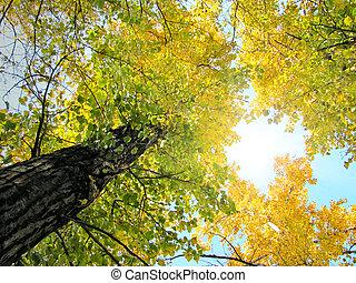 Foliage de otoño