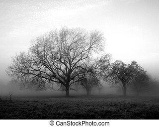 Fuera de la niebla