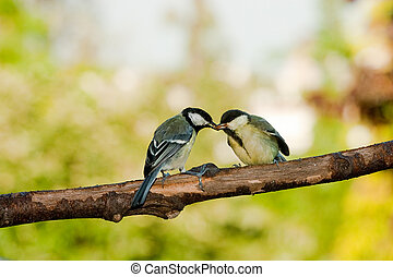 Grandes aves alimentándose