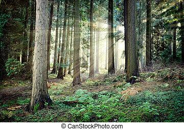 Hermoso atardecer en misterioso bosque