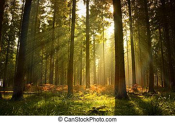 hermoso, bosque