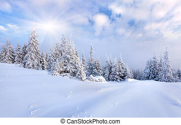 Hermoso paisaje invernal con nieve cubierta de árboles.