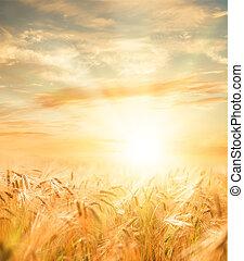 hermoso, trigo, field.