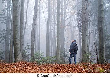 hombre, niebla, bosque, misterioso, oscuridad, haya