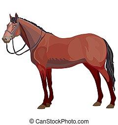 ilustración, natural, plano de fondo, caballo, estilo, blanco, objeto, aislado, vector, marrón