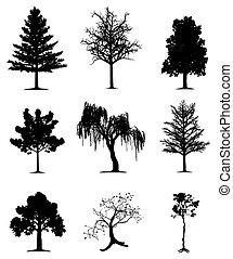 La colección de árboles