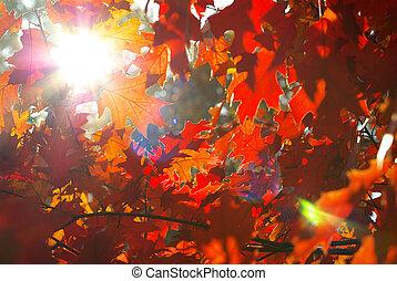 Las hojas de otoño