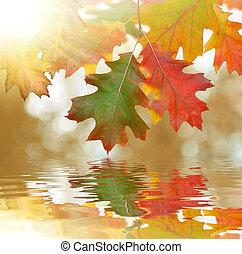 Las hojas de roble de otoño
