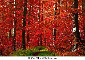Las hojas rojas del bosque