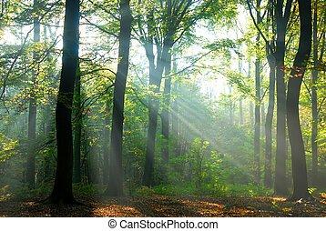 Los rayos del sol vierten en un bosque de otoño