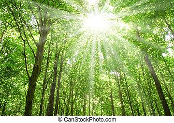Luz del sol en los árboles del bosque