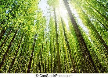 Luz solar en el bosque