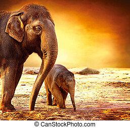 Madre elefante y bebé al aire libre