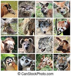 Mamíferos animales collage