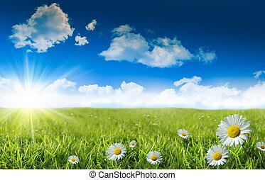 margaritas salvajes en la hierba con un cielo azul