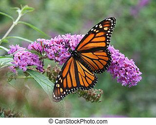 Mariposa Monarca y flores silvestres