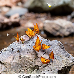 Mariposas acuden en la selva tropical.