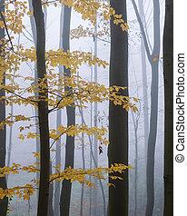 misterioso, haya, oscuridad, bosque, niebla