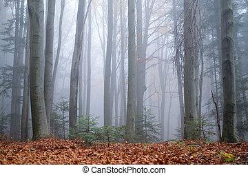 misterioso, oscuridad, haya, niebla, bosque