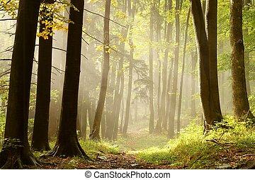 Misty rastro en un bosque encantado