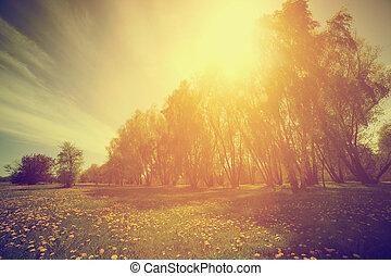 Naturaleza antigua. Parque soleado de primavera, árboles y dientes de león